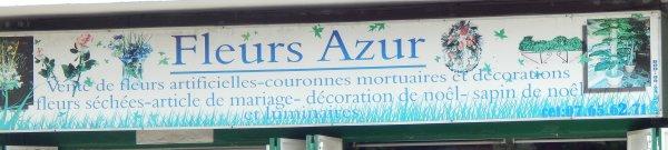 fleurs   azur