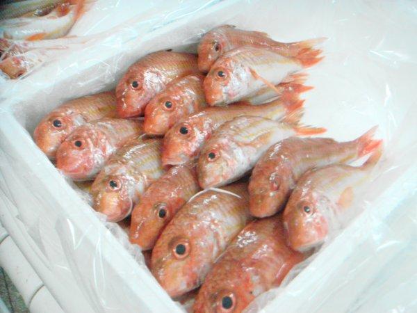 Hydrofish