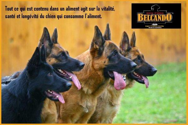 Belcando Pet's Life Abidjan Ci