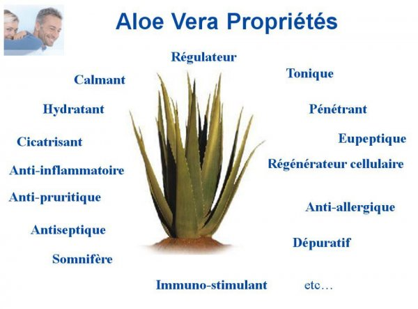 IVOIRE ALOES